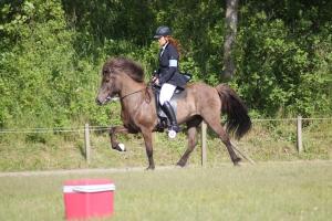 heste fyn 006