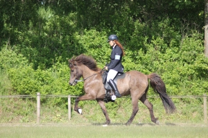 heste fyn 001